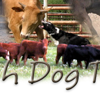 Stockdogs Reduce Stress to Livestock.